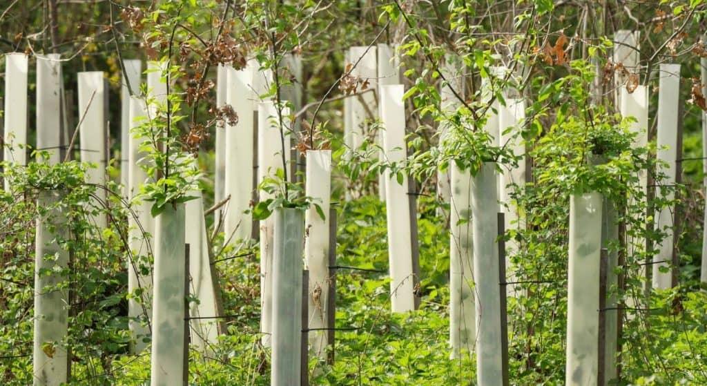 Aufforstungsprojekte helfen der Natur, sich zu erholen.