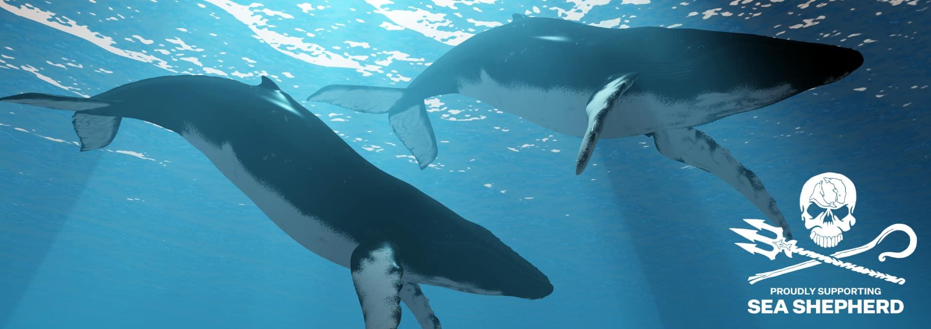 Durch Sea Shepherd setzt sich DQ Solutions ein für den Schutz von Walen und anderen Meeresbewohnern