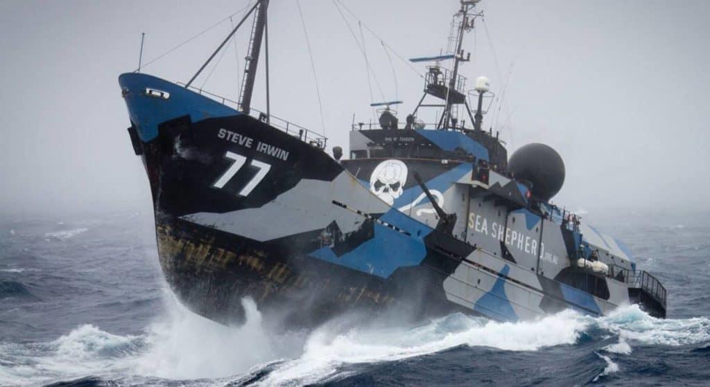 Steve Irwin ist eines der Schiffe von Sea Shepherd