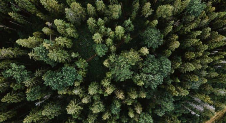 DQ Solutions kompensiert CO2 durch Bäume pflanzen