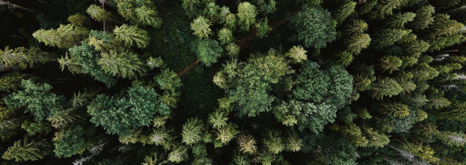 DQ Solutions schützt das Klima durch Bäume pflanzen